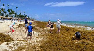 Algas vuelven a invadir playas