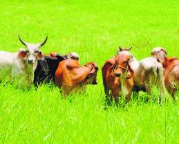Buscan reiniciar exportación de carne a mercado de los Estados Unidos