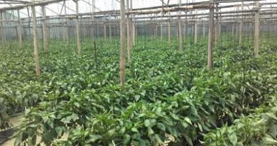 Califican las lluvias de bendición para el sector agropecuario en RD