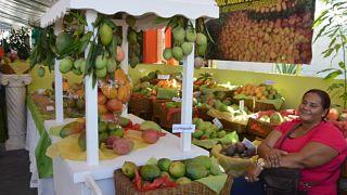 Productores resaltan éxito XIV Expo Mango 2018