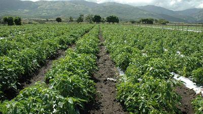 Pide al Presidente entregue más recursos a Ministerio de Agricultura