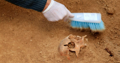 Hallan el cuerpo de un hombre asesinado gracias a un árbol que creció de una semilla en su estómago