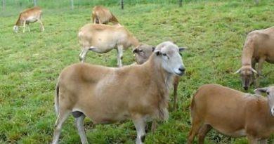 La falta de fondos frena una campaña global para erradicar enfermedad animal