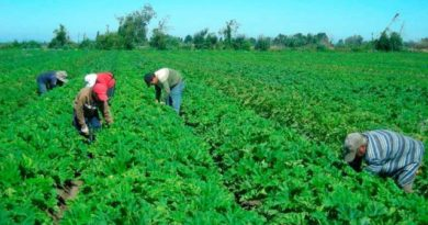 La FAO y liga científica buscan impulsar la agroecología en Latinoamérica