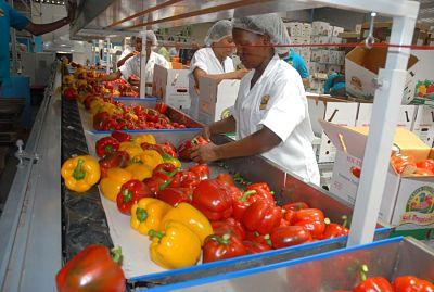 Ministro brasileño: Alejarse de China y países árabes afectaría a agronegocio