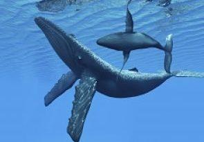 Joven alemana es elegida nueva 'Susurradora de ballenas' en R.D