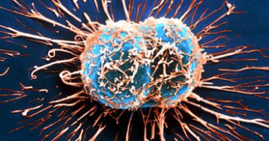 ¿Cómo actúa el sistema inmunológico contra el cáncer?