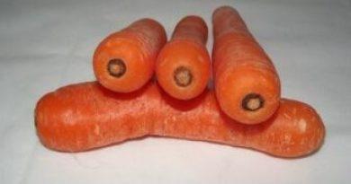 ¿Cuáles son los beneficios que aportan las zanahorias?