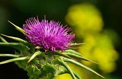 Mejores remedios naturales para el hígado graso