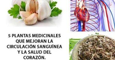Plantas medicinales que mejoran la circulación sanguínea y la salud del corazón