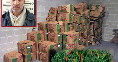 Importador dominicano culpable por traficar 16 kilos de cocaína en ajíes que trajo de República Dominicana