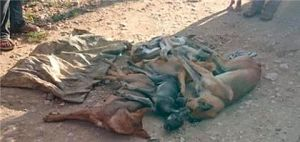 FUERA DE CONTROL :Desalmados envenenan a más de 20 perros en Villa Rivas