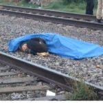 LEALTAD: Un perro fiel se niega a abandonar el cuerpo de su dueño, arrollado por un tren