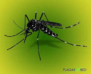 Y LOS MOSQUITOS PUYAN ;El dengue está atacando duro a menores 15 años
