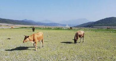 ALERTA :Presa de Sabana Yegua en estado de emergencia; situación crítica