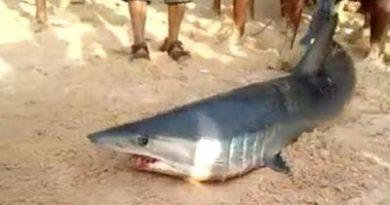 Biólogo marino afirma tiburón atrapado en Sosúa fue llevado a alta mar