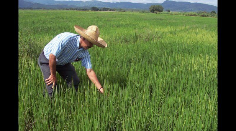 ALERTA: Productores de San Juan insisten en que no hay condiciones para siembra arroz