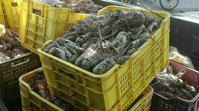 Procuraduría Medio Ambiente realiza operativo contra comercialización ilegal de especies marinas en período de veda