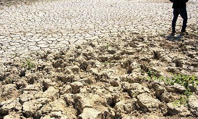 ATENCIÓN: Productores dicen sequía los tiene en quiebra
