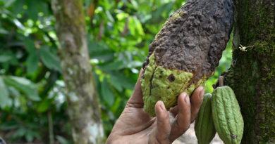 ATENCIÓN: Cacaocultores sin dinero para pagar préstamos de visita sorpresa