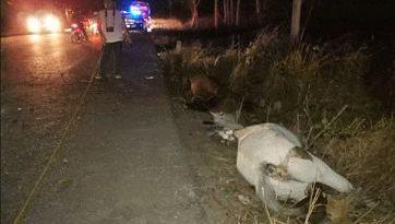 Dos caballos mueren al chocar de frente en Sabana Alta, San Juan