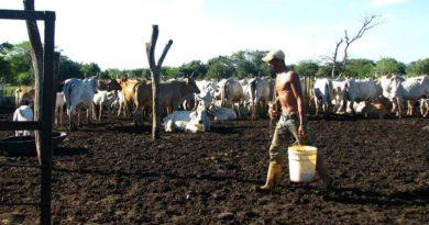 Sequía sigue afectando la ganadería y agricultura en Luperón