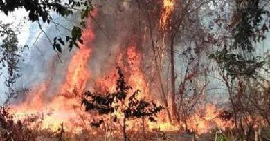 Incendio forestal afecta una amplia zona boscosa de Imbert y Altamira