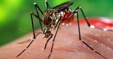 República Dominicana reporta 781 nuevos casos de dengue y suman 8,855