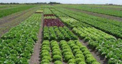 Empresas impulsan la regeneración de la agricultura con métodos holísticos