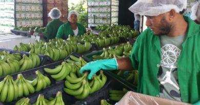 ALERTA: La sequía pone a bananeros a perder US$500 mil semanal