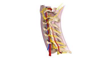 ALERTA: Aprende todo sobre los nervios raquídeos cervicales