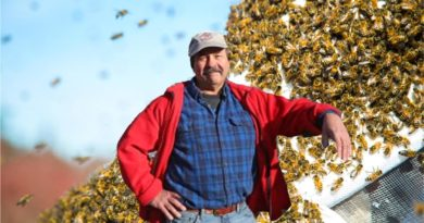 Pareja convive con 120 mil abejas entre la chimenea y los marcos de su casa en Long Island