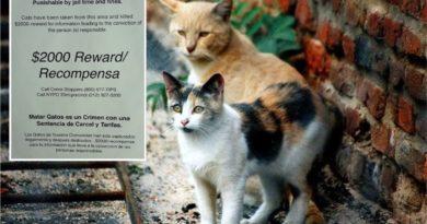Secuestran y asesinan gatos en el Alto Manhattan; policía ofrece recompensa de $2,000 por información