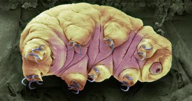 Las criaturas más indestructibles de la Tierra presentan un punto débil