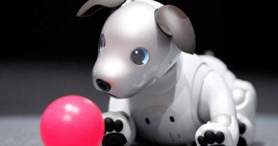 En Japón ya se están haciendo hasta fiestas de cumpleaños de perros robots