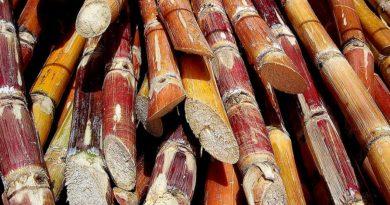Azúcar lidera crecimiento de las exportaciones nacionales