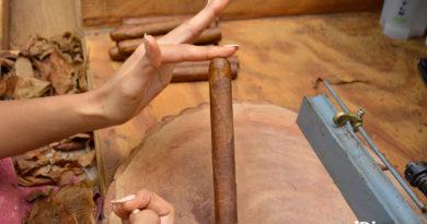 Las manos de mujeres dan forma a la industria del tabaco dominicano