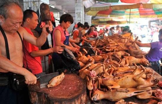 """China prohíbe criar perros para consumo humano, al """"no considerarlos ganado"""""""
