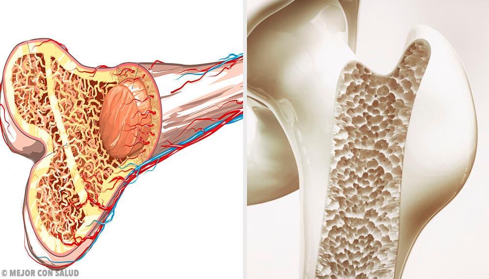 Osteogénesis: la formación de los huesos