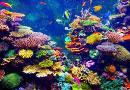 RD resalta turismo y biodiversidad marina con exposición virtual