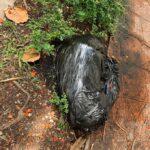 Denuncian extraño paquete con olor putrefacto en Gazcue