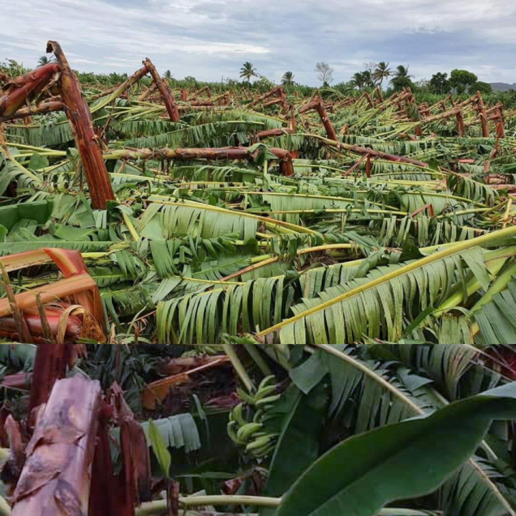 Vientos de tormenta Isaías causaron daños millonarios a producción agrícola en Puerto Plata