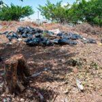 ¿Y los troncos dejados por la tormenta Laura, quién los recoge?