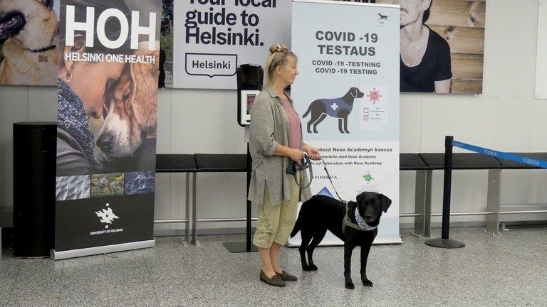 Por qué los perros podrían ser el futuro en la detección rápida del coronavirus