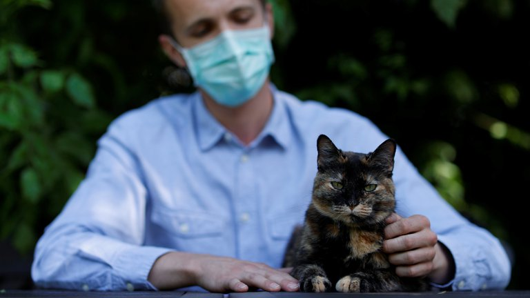 COVID-19 y mascotas: iniciaron las pruebas de una vacuna para gatos