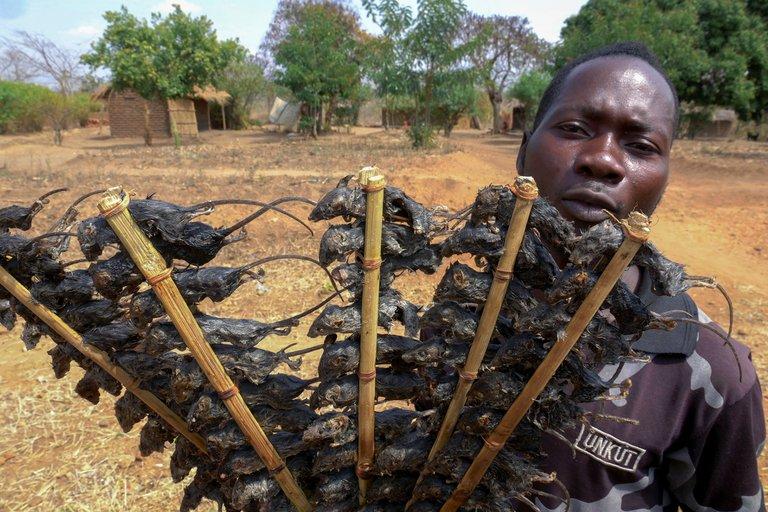 """Comer brochetas de ratón para ahuyentar al hambre en medio de la pandemia en Malaui: """"Es una valiosa fuente de proteínas"""""""