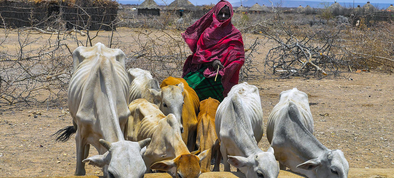 Se acaban los fondos para alimentar a los refugiados en el este de África