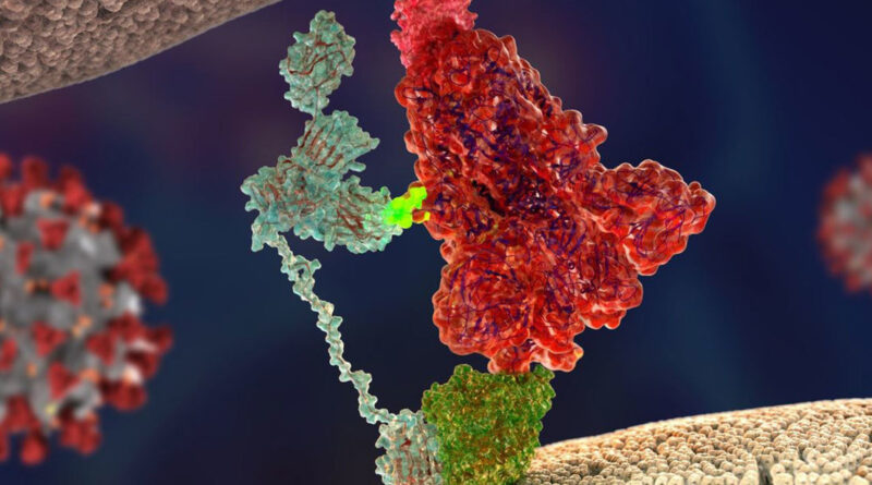 Descubren el 'arma secreta' del coronavirus que lo hace tan infeccioso y lo distingue de su predecesor