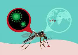 OJO: Hasta el mes pasado, 32 muertes dengue y 22 leptospirosis