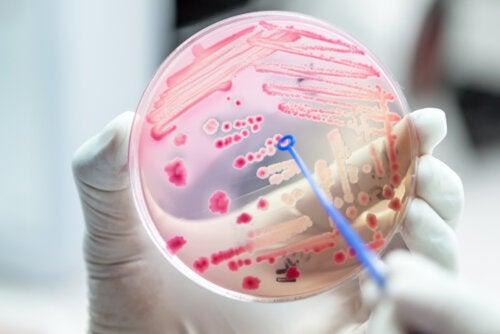 Bacterias resistentes a antibióticos que preocupan a la salud pública